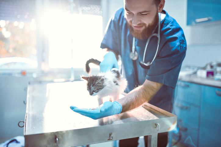 Veterinary Social Media Services